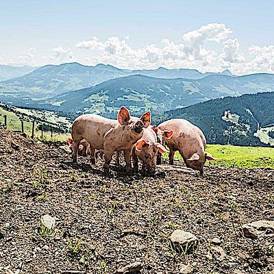 La Loupe Kochart Kitzbuhel 5 75e0zps3j