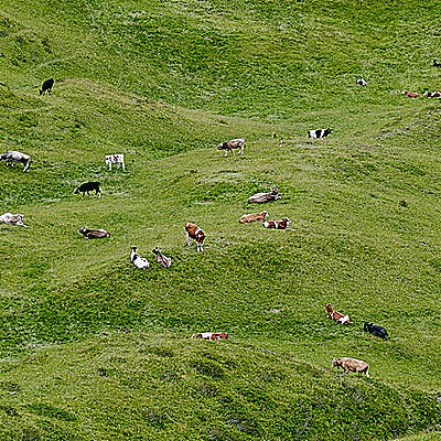 Laloupe stanton arlberg alex kaiser 05 755cddx9l