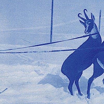 Titelbild für Viel-seitige Skigeschichte