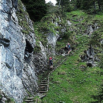 Titelbild für Die Essenz der Alpen